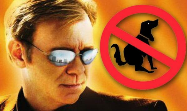 horatio-sunglasses-csi-miami-3-cropped